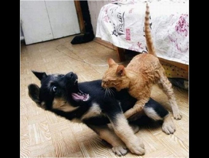 dogs vs cats the revenge yummypets