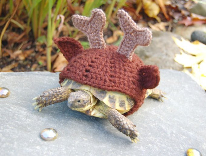 blog_yummypets_habits_tortue_04_2014_4