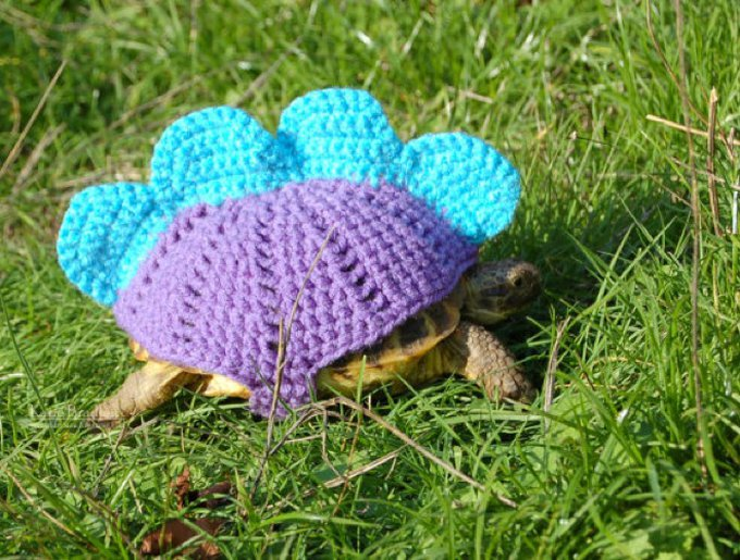 blog_yummypets_habits_tortue_04_2014_5