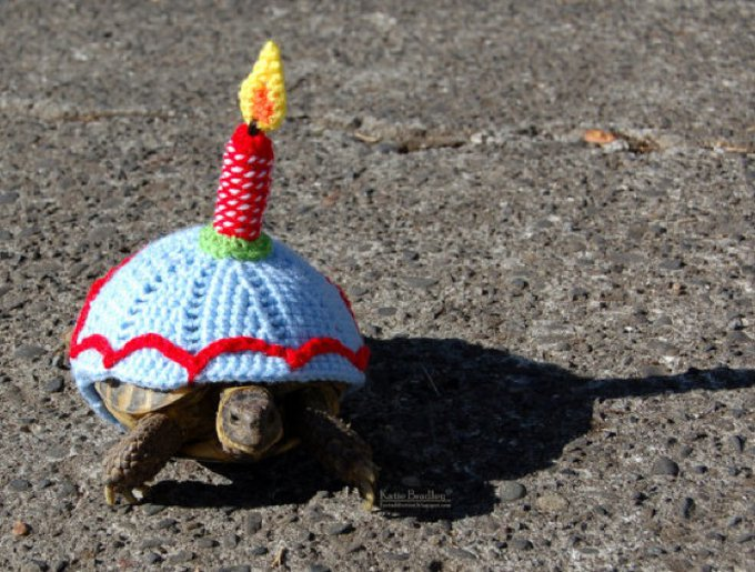 blog_yummypets_habits_tortue_04_2014_7