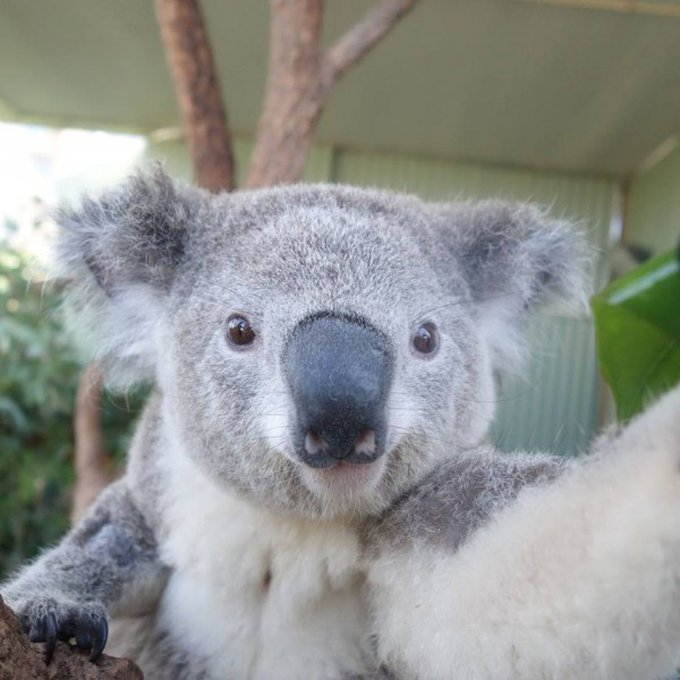 blog_yummypets_selfies_koalas_04_2014