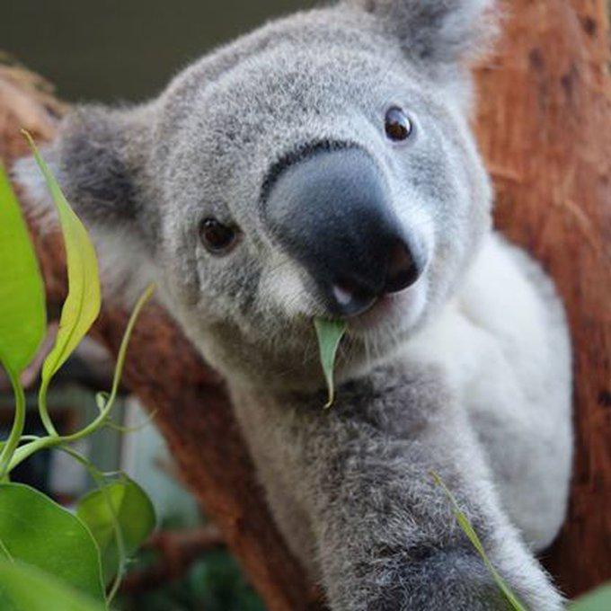 blog_yummypets_selfies_koalas_04_2014_3