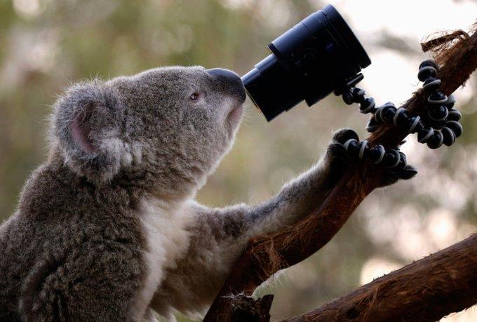 blog_yummypets_selfies_koalas_04_2014_4