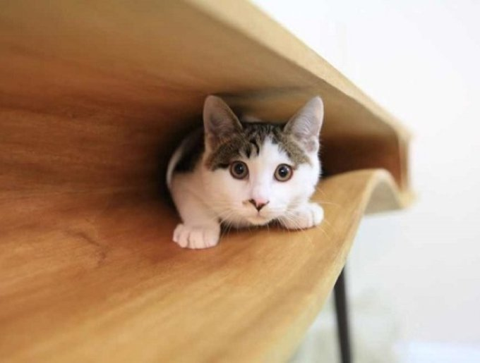 blog_yummypets_table_chat2_04_14