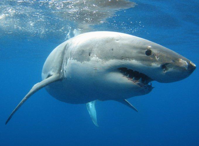 Les 10 animaux les plus dangereux d'Australie