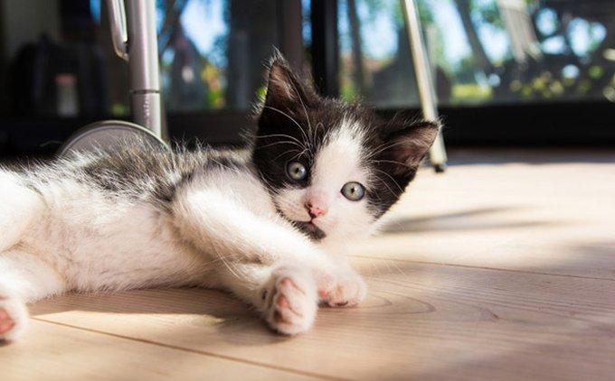 article-chaton