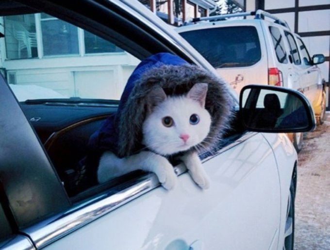 blog_yummypets_animaux_voiture16_05_14