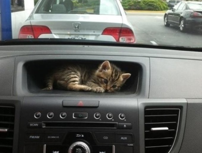 blog_yummypets_animaux_voiture8_05_14