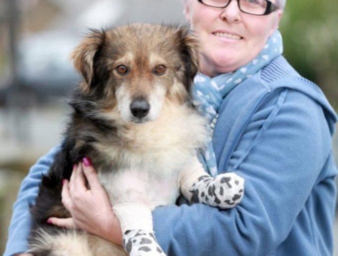Colin, un chien qui a subit une opération des pattes avants