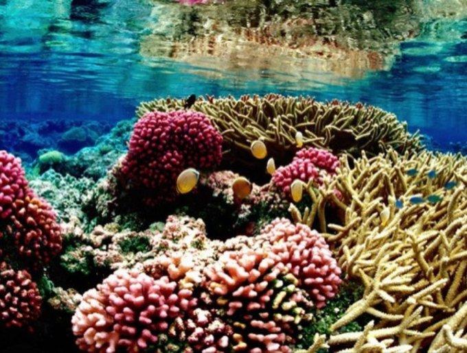 La barrière de corails aux Maldives