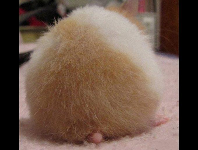 blog_yummypets_hamster_butt11_05_14