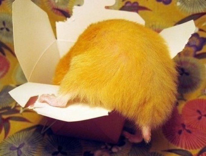 blog_yummypets_hamster_butt14_05_14