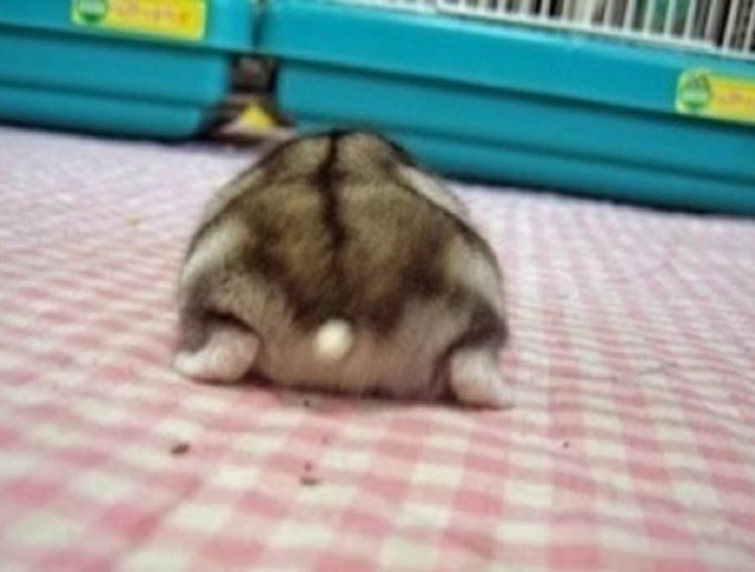blog_yummypets_hamster_butt1_05_14