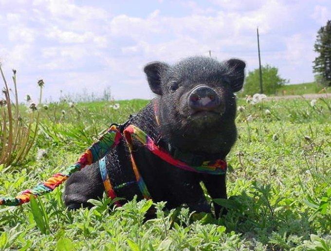 blog_yummypets_heroic_animals10_05_14