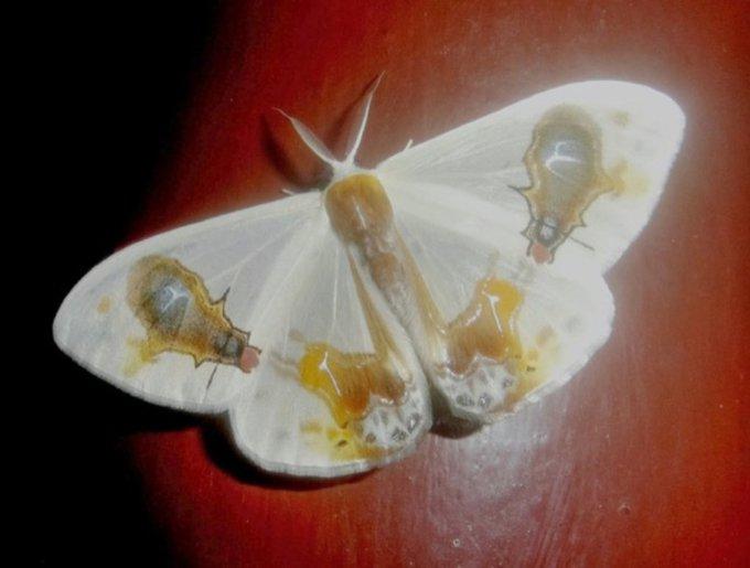 blog_yummypets_papillon12_05_14