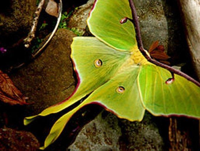 blog_yummypets_papillon4_05_14
