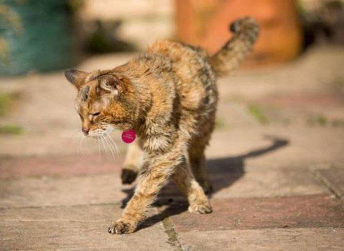 Poppy, la plus vieille chatte du monde