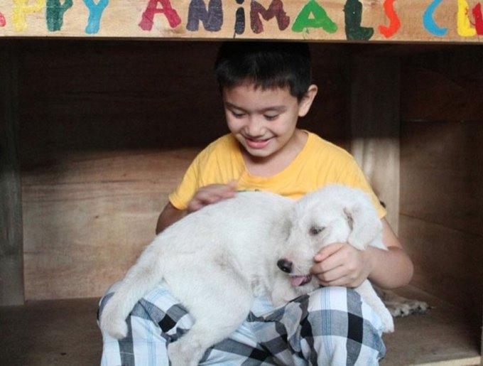 un enfant sauve des chiens errants