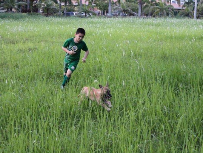 un enfant sauve des chiens errants et court avec eux