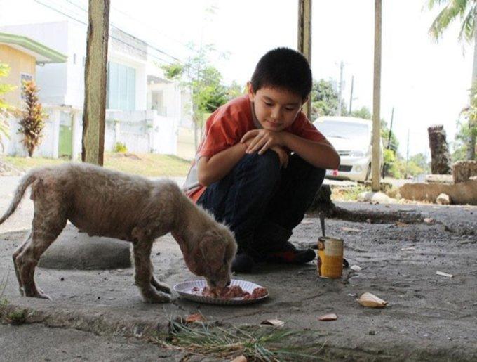 un enfant sauve des chiens errants et les nourrit