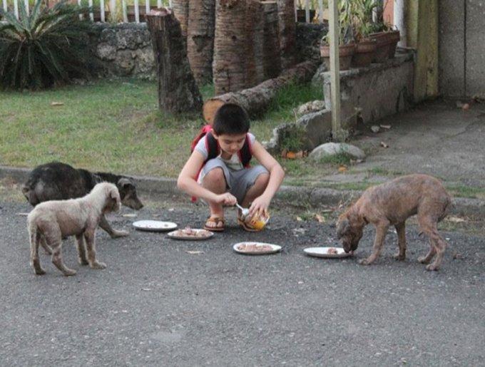 un enfant sauve des chiens errants et les nourrits
