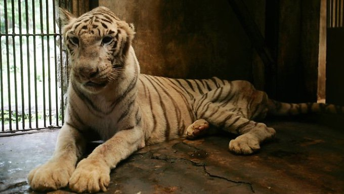 blog_yummypets_the_zoo_of_death_in_indonesia_02_10_2015