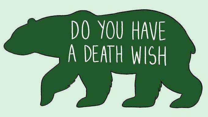 caresser un ours