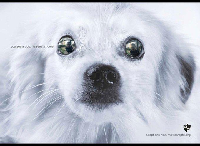 Vous voyez un chien, lui voit une maison / adoptonenow.visit.caraphil.org