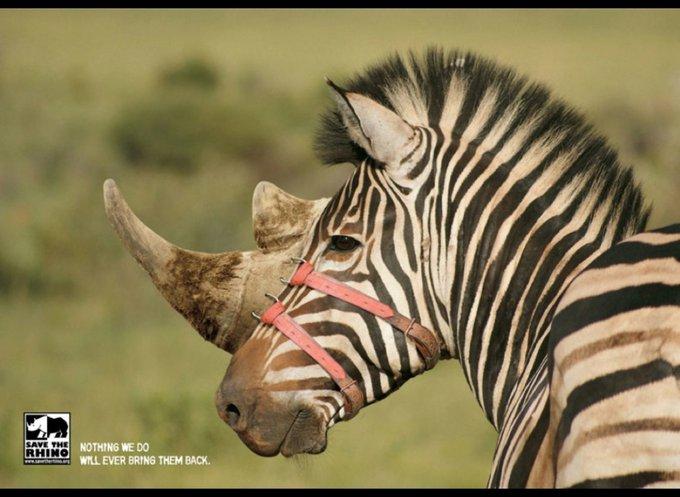 Sauvez les rhinocéros, nous ne pourrons rien pour les ramener / Stick