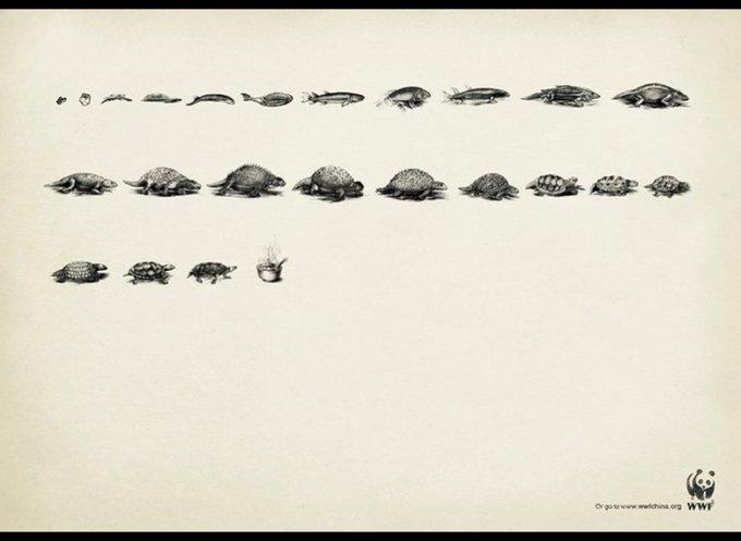 WWF : Evolution / www.wwf.org