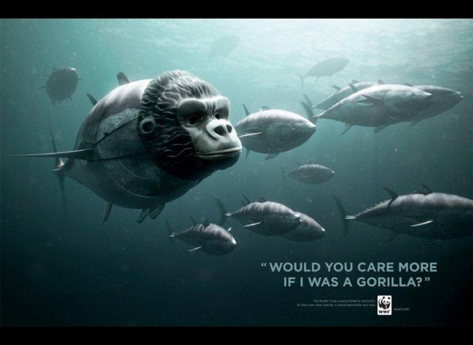 WWF / thon rouge : Feriez-vous plus attention si j'étais un gorille ? / www.wwf.org