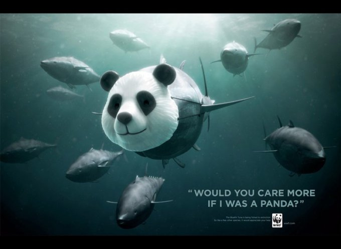 WWF / thon rouge : Feriez-vous plus attention si j'étais un panda ? / www.wwf.org