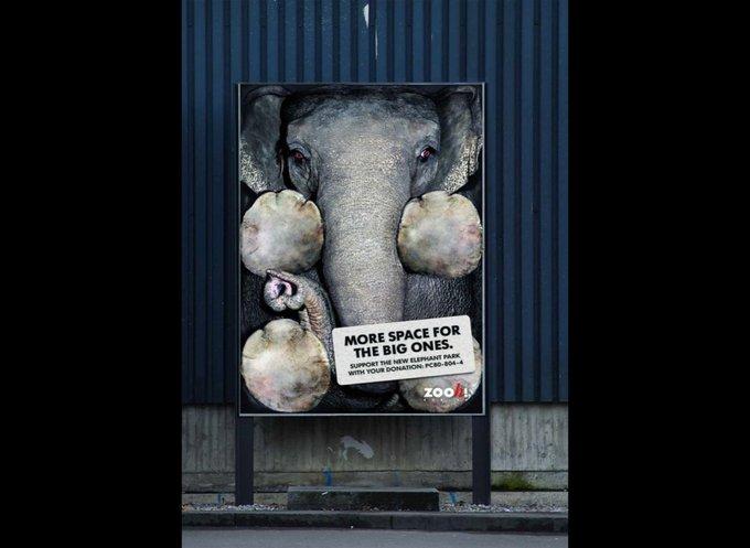 Zoo de Zurich : Plus d'espace pour les grands / Advico Y and R AG