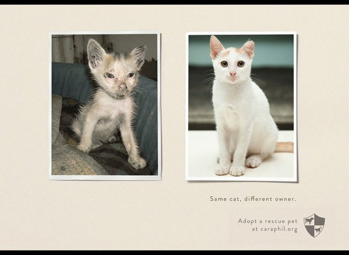 Même chat, différent propriétaire / www.caraphil.org