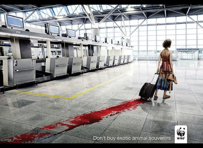 N'achetez pas d'animaux exotiques en souvenir / www.wwf.org