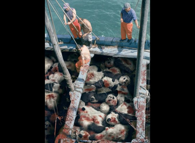 Quand vous voyez un thon, pensez à un panda / Sea Shepherd Conservation Society