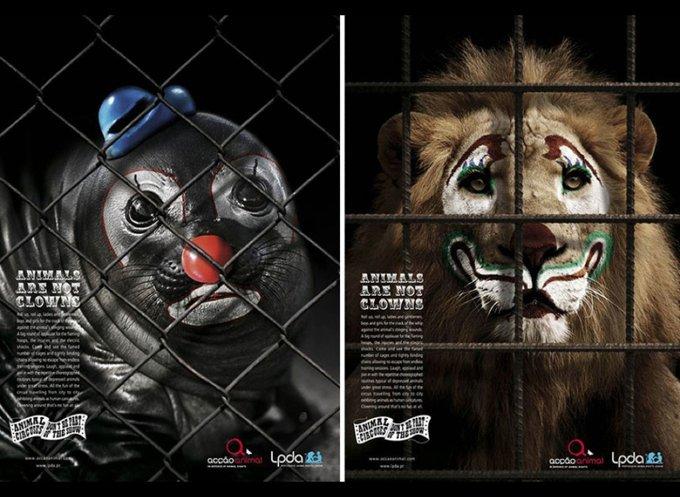 Les animaux ne sont pas des clowns / Partners Lisboa