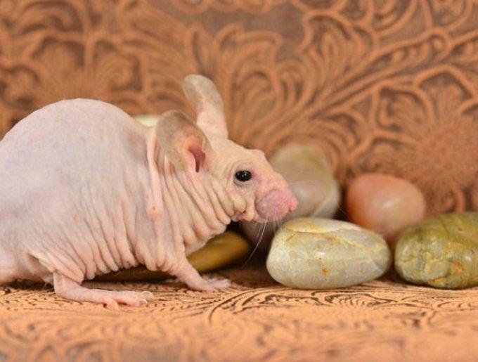 blog_yummypets_animaux_sans_poils_4_06_14