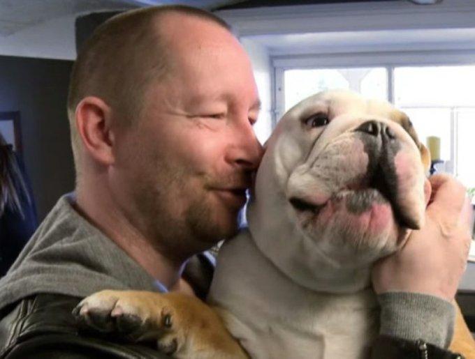 un bulldog avec son propriétaire