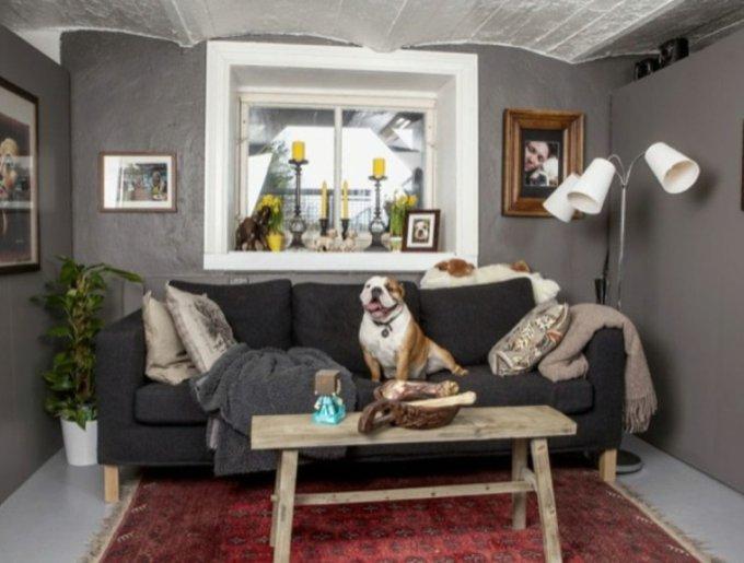 un bulldog comme chez lui