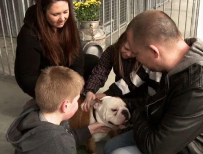 un bulldog avec sa famille