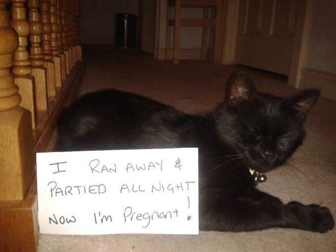 un chat avec une pancarte de la honte