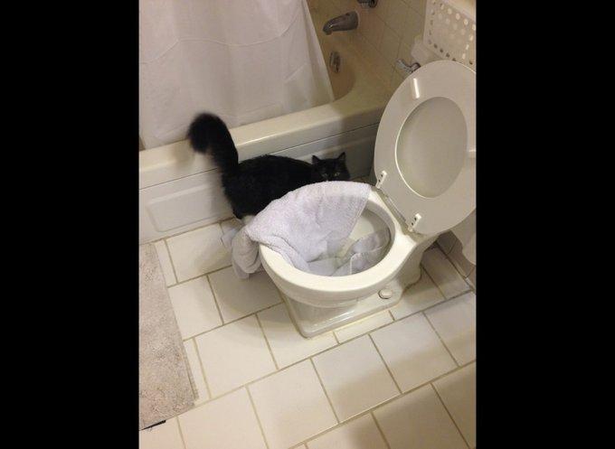 Chat qui a retourné la salle de bain