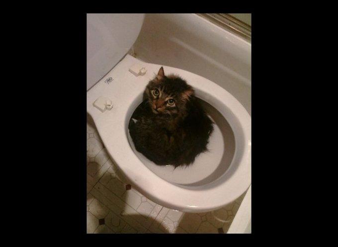 Chat entièrement dans les WC
