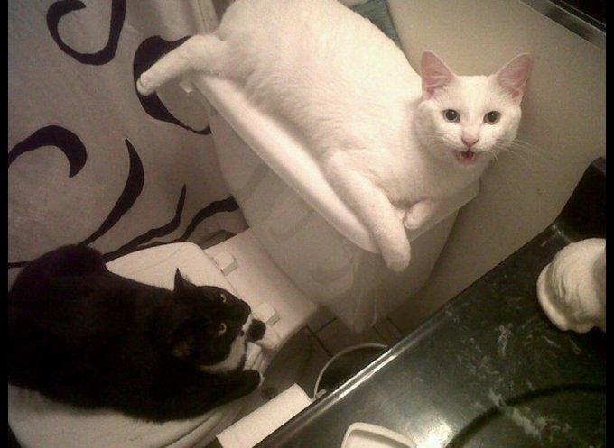 Deux chats allongés sur les Wc et la cuvette