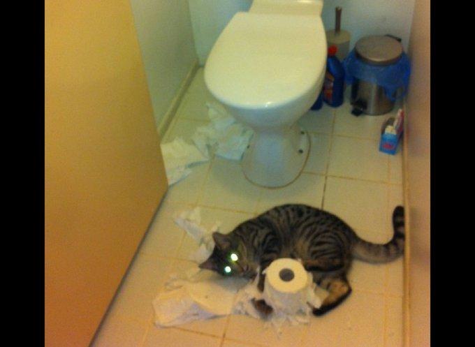Chat qui dépiaute un rouleau de papier toilette