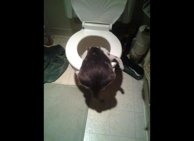 chat la tete dans les WC