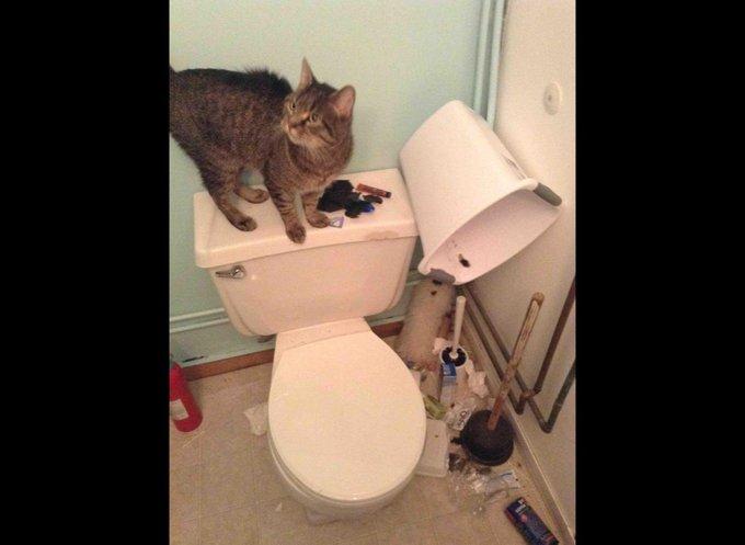 Chat qui met le bazar dans les toilettes