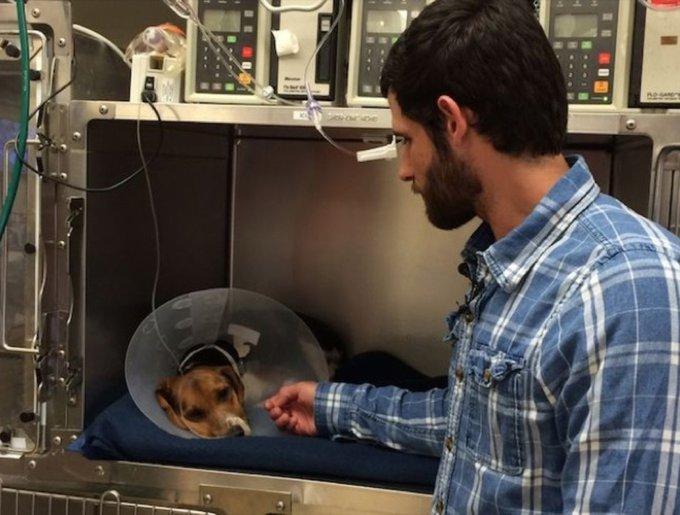 Un homme prend soin de Buster, un chien blessé par une voiture