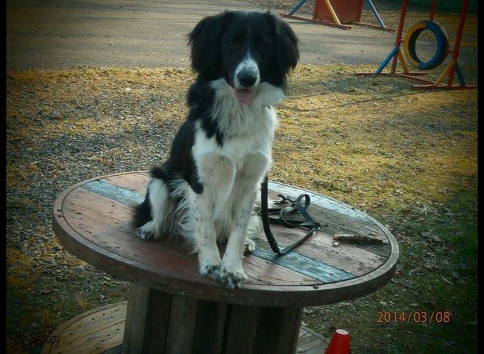 Photo de Snoopy le chien sportif